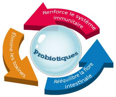 Probiotiques Bienfaits